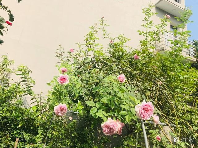 Khu vườn hoa hồng với đủ loại từ nội đến ngoại rộng 100m² ở Quảng Ninh - Ảnh 24.