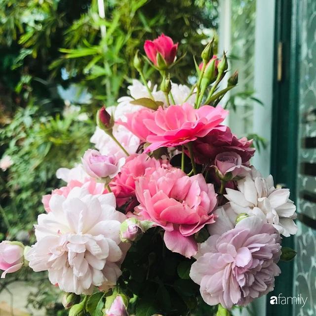 Khu vườn hoa hồng với đủ loại từ nội đến ngoại rộng 100m² ở Quảng Ninh - Ảnh 27.