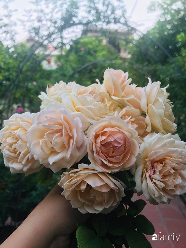 Khu vườn hoa hồng với đủ loại từ nội đến ngoại rộng 100m² ở Quảng Ninh - Ảnh 29.