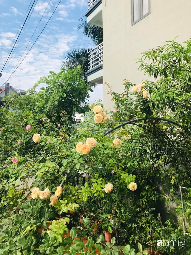 Khu vườn hoa hồng với đủ loại từ nội đến ngoại rộng 100m² ở Quảng Ninh - Ảnh 4.