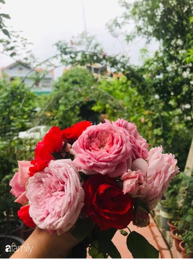 Khu vườn hoa hồng với đủ loại từ nội đến ngoại rộng 100m² ở Quảng Ninh - Ảnh 31.