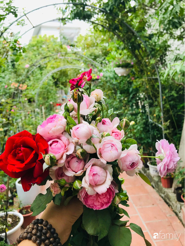 Khu vườn hoa hồng với đủ loại từ nội đến ngoại rộng 100m² ở Quảng Ninh - Ảnh 5.