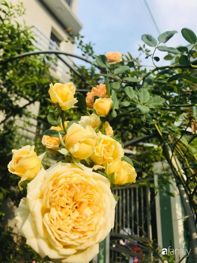 Khu vườn hoa hồng với đủ loại từ nội đến ngoại rộng 100m² ở Quảng Ninh - Ảnh 9.