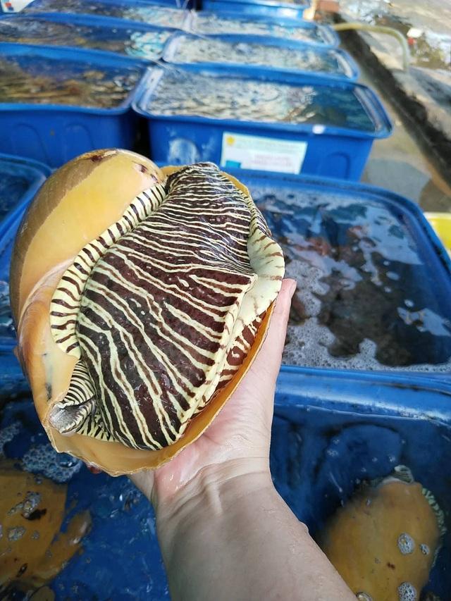 """Chợ hải sản """"không mặc cả"""" trên đảo Nam Du - Ảnh 7."""