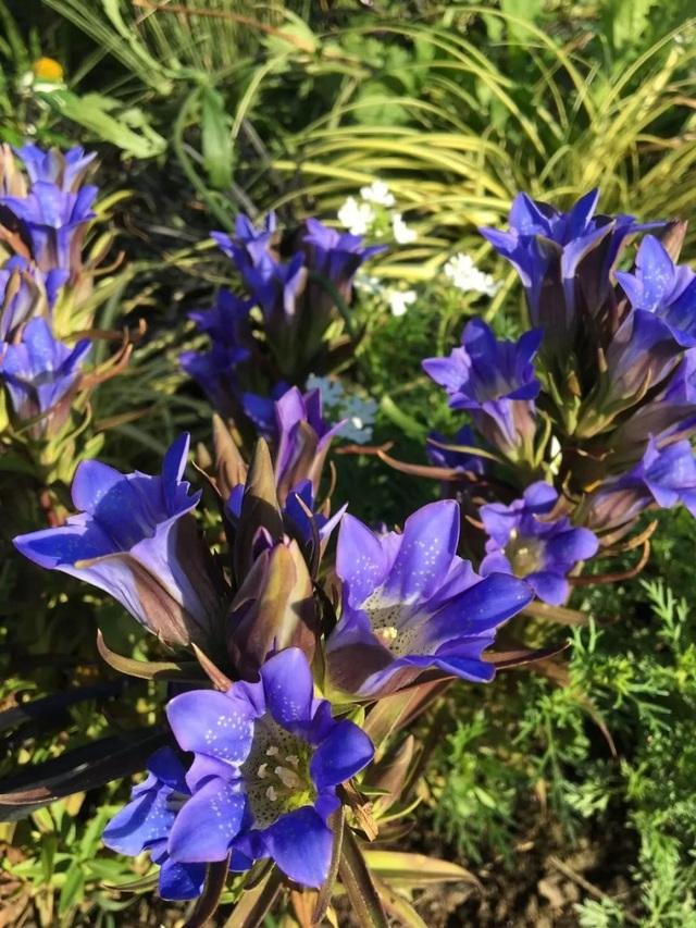 Cặp vợ chồng trẻ dành 5 năm để biến khu đất hoang rộng 6000m² thành khu vườn thiên đường của cỏ cây, hoa lá - Ảnh 28.