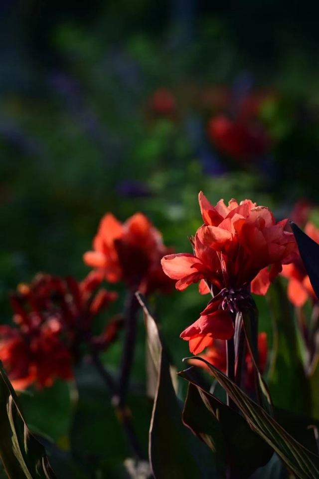 Cặp vợ chồng trẻ dành 5 năm để biến khu đất hoang rộng 6000m² thành khu vườn thiên đường của cỏ cây, hoa lá - Ảnh 11.
