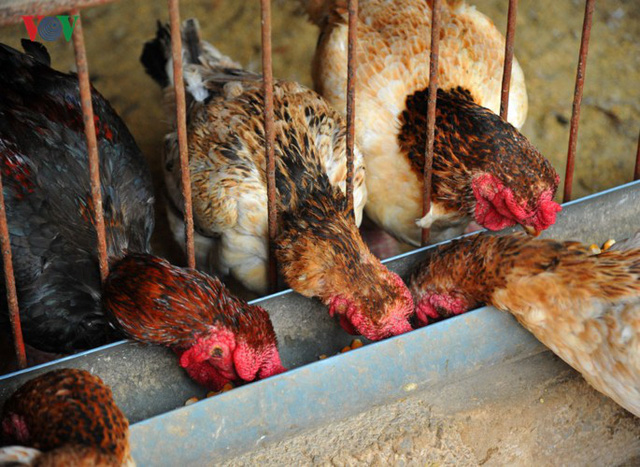 Đông Tảo là một trong những xã có tên gắn liền với giống gà Đông Tảo, nó như một thương hiệu khẳng định về nguồn gốc của giống gà quý, nói đến gà Đông Tảo là nói đến xã Đông Tảo và ngươc lại.