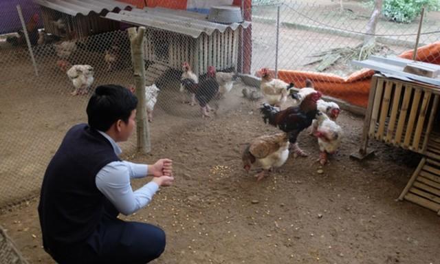 Khách mua làm quà biếu thường chọn gà có đôi chân to, lông màu mật hoặc màu tía, bộ cánh thon, mào sít... Để nuôi được những con gà Đông Tảo đẹp, người chủ phải rất kỳ công, từ khâu chọn giống đến chăm sóc tới khi gà trưởng thành và xuất chuồng. (Ảnh: VTC News)./
