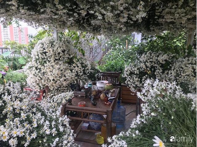 Ngắm triệu bông cúc họa mi khoe sắc dịu dàng, tinh khôi trên sân thượng của hai người phụ nữ dịu dàng - Ảnh 4.