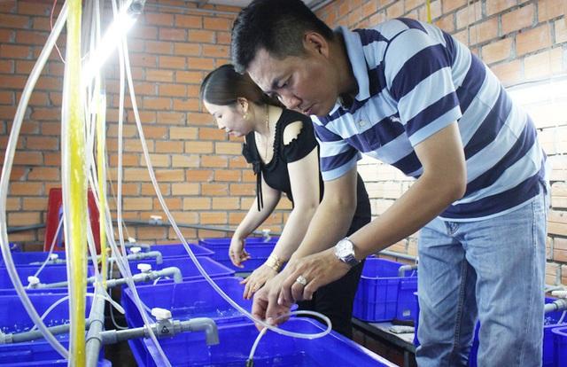 Anh giám đốc bỏ việc đi nuôi lươn  - Ảnh 1.