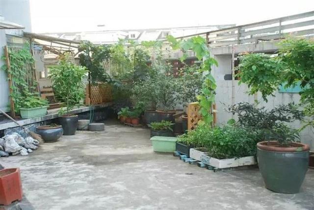 Biến sân thượng trống thành khu vườn đủ loại cây hoa đẹp như công viên, gia đình trẻ khiến nhiều người ghen tị - Ảnh 3.