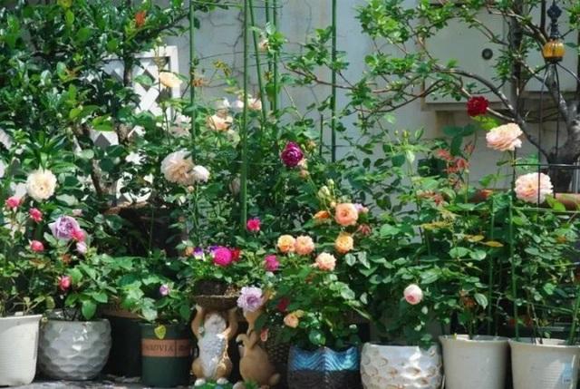Biến sân thượng trống thành khu vườn đủ loại cây hoa đẹp như công viên, gia đình trẻ khiến nhiều người ghen tị - Ảnh 15.