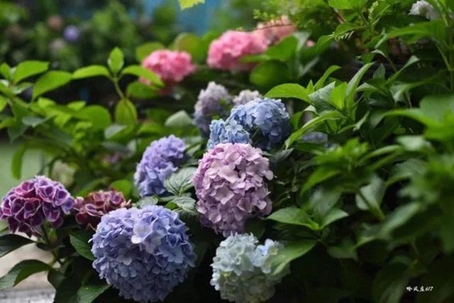 Biến sân thượng trống thành khu vườn đủ loại cây hoa đẹp như công viên, gia đình trẻ khiến nhiều người ghen tị - Ảnh 20.