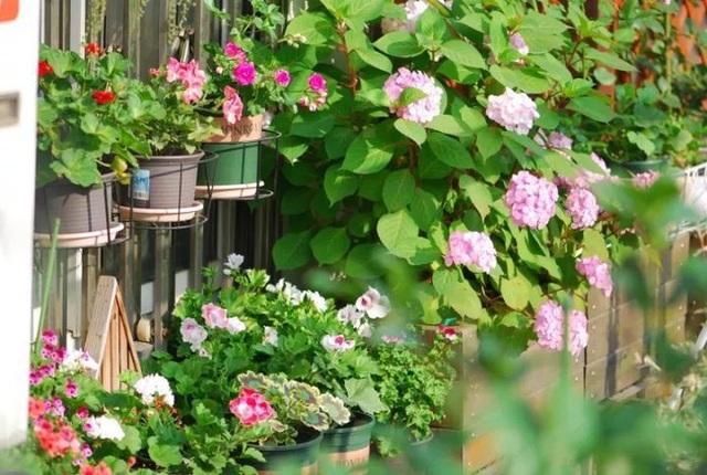 Biến sân thượng trống thành khu vườn đủ loại cây hoa đẹp như công viên, gia đình trẻ khiến nhiều người ghen tị - Ảnh 21.