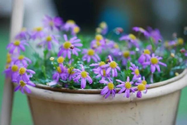 Biến sân thượng trống thành khu vườn đủ loại cây hoa đẹp như công viên, gia đình trẻ khiến nhiều người ghen tị - Ảnh 22.