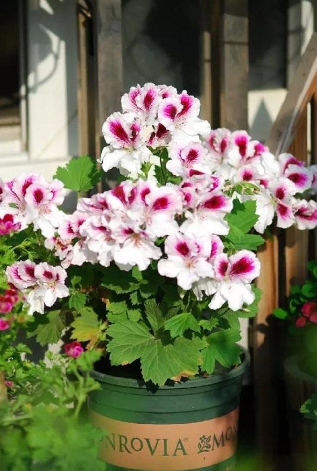 Biến sân thượng trống thành khu vườn đủ loại cây hoa đẹp như công viên, gia đình trẻ khiến nhiều người ghen tị - Ảnh 26.