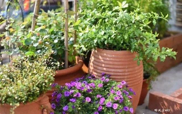 Biến sân thượng trống thành khu vườn đủ loại cây hoa đẹp như công viên, gia đình trẻ khiến nhiều người ghen tị - Ảnh 27.
