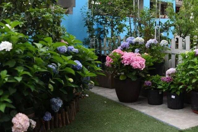 Biến sân thượng trống thành khu vườn đủ loại cây hoa đẹp như công viên, gia đình trẻ khiến nhiều người ghen tị - Ảnh 28.