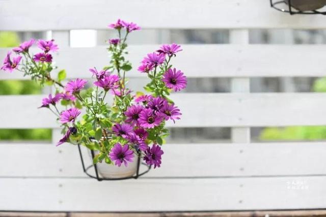 Biến sân thượng trống thành khu vườn đủ loại cây hoa đẹp như công viên, gia đình trẻ khiến nhiều người ghen tị - Ảnh 29.
