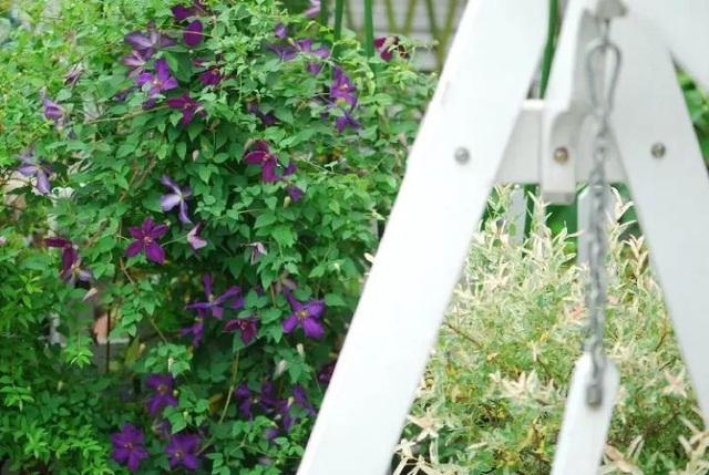 Biến sân thượng trống thành khu vườn đủ loại cây hoa đẹp như công viên, gia đình trẻ khiến nhiều người ghen tị - Ảnh 31.