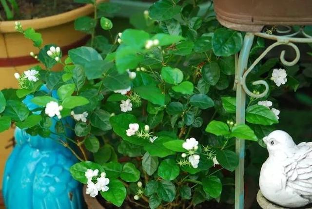 Biến sân thượng trống thành khu vườn đủ loại cây hoa đẹp như công viên, gia đình trẻ khiến nhiều người ghen tị - Ảnh 32.