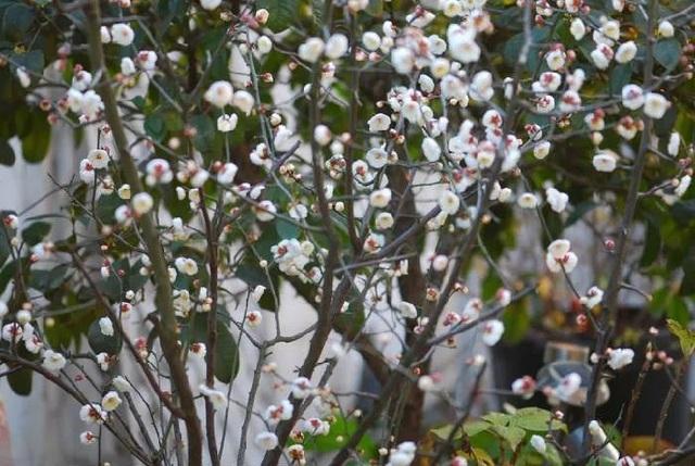 Biến sân thượng trống thành khu vườn đủ loại cây hoa đẹp như công viên, gia đình trẻ khiến nhiều người ghen tị - Ảnh 34.