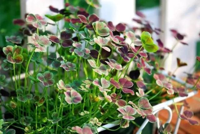 Biến sân thượng trống thành khu vườn đủ loại cây hoa đẹp như công viên, gia đình trẻ khiến nhiều người ghen tị - Ảnh 36.