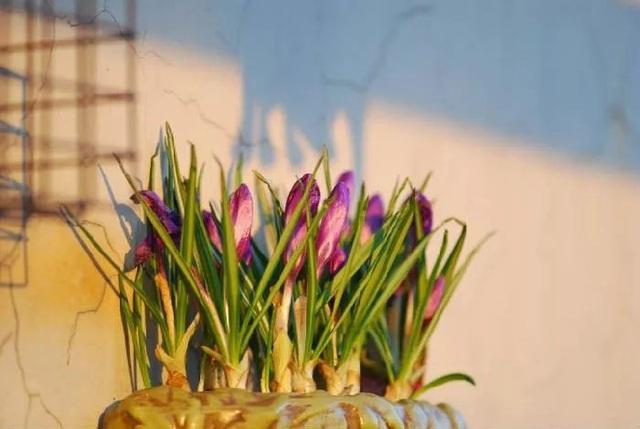 Biến sân thượng trống thành khu vườn đủ loại cây hoa đẹp như công viên, gia đình trẻ khiến nhiều người ghen tị - Ảnh 37.