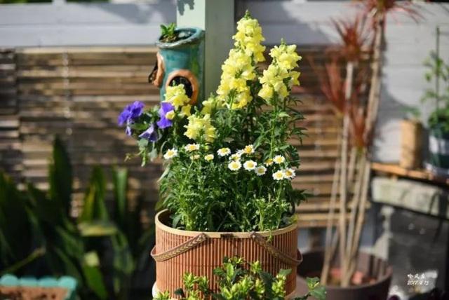 Biến sân thượng trống thành khu vườn đủ loại cây hoa đẹp như công viên, gia đình trẻ khiến nhiều người ghen tị - Ảnh 39.