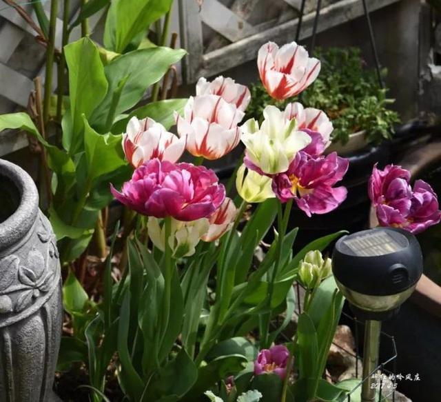 Biến sân thượng trống thành khu vườn đủ loại cây hoa đẹp như công viên, gia đình trẻ khiến nhiều người ghen tị - Ảnh 7.