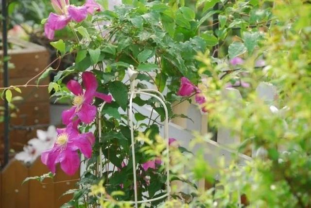 Biến sân thượng trống thành khu vườn đủ loại cây hoa đẹp như công viên, gia đình trẻ khiến nhiều người ghen tị - Ảnh 8.