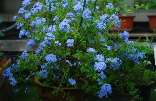 Biến sân thượng trống thành khu vườn đủ loại cây hoa đẹp như công viên, gia đình trẻ khiến nhiều người ghen tị - Ảnh 9.