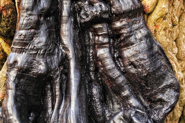 Thân cây me có rất nhiều vết u nần, thân cây cứng như đá, tạo ra những hình thù rất kỳ bí mà chỉ cổ thụ mới có được.