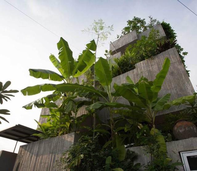 Với mặt tiền nhà là các khối hộp bê tông xếp chồng - nơi chủ nhà trồng hơn 40 loại cây ăn quả và rau, khiến nó trở nên nổi bật với xung quanh, ngôi nhà được đặt tên là Nhà hộp cây.