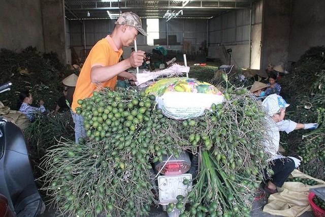 Theo một số người bán cau ở chợ, do người trồng cau ngày càng ít, vụ thu hoạch đã qua, thương lái Trung Quốc thu mua nhiều nên giá cau tăng dần vào cuối năm. Ảnh: I.T
