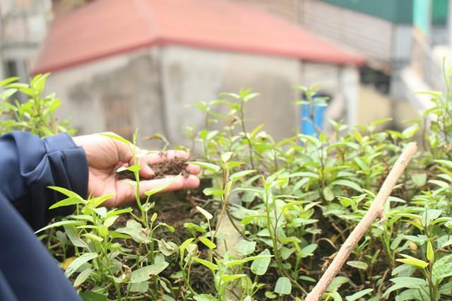 Đất trồng đảm bảo độ ẩm, tơi xốp và màu mỡ dù trải qua nhiều vụ rau.