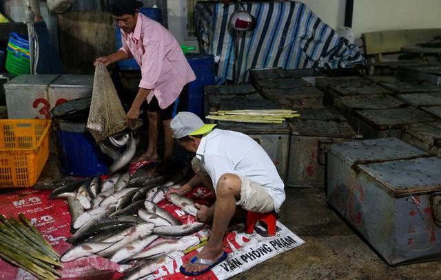 Tại cơ sở của bà Cúc, hàng chục thùng chứa cá lóc được nhập từ An Giang trong đêm. Năm nay tôi mua gần 3.000 con, tương đương hơn ba tấn. Trong khi ngày thường tiệm cũng chỉ bán khoảng 200 con thôi, bà Cúc nói.