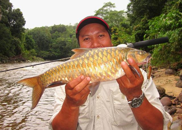 Cá Empurau ưa nước lạnh, sạch và với lượng oxy hòa tan đầy đủ.