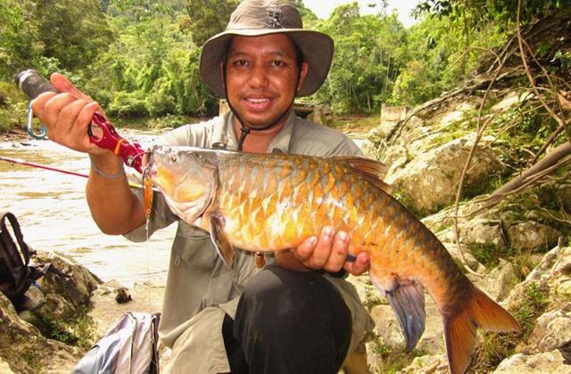 Cách chế biến cá Empurau phổ biến nhất là hấp. Ngoài ra, cá còn thể nấu thành món cà ri.