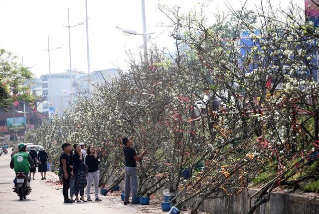 Một số tiểu thương đã chớp cơ hội việc hoa đào ở Hà Nội đã gần như không còn do nắng nóng nên mạnh tay đưa lê từ vùng núi xuống.