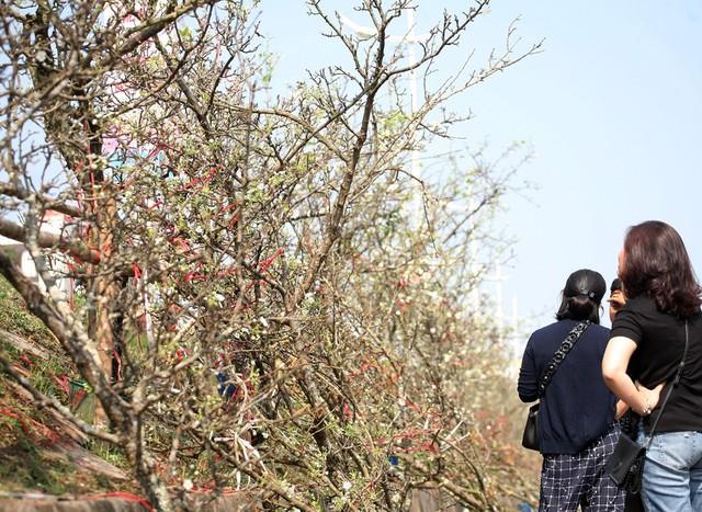 Rất nhiều người chơi ở Hà Nội quan tâm và kéo đến mua loại hoa này.