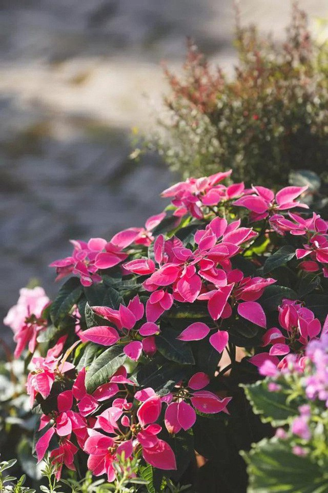 Niềm vui của Zoe là được ngắm hoa khoe sắc trong vườn nhà.