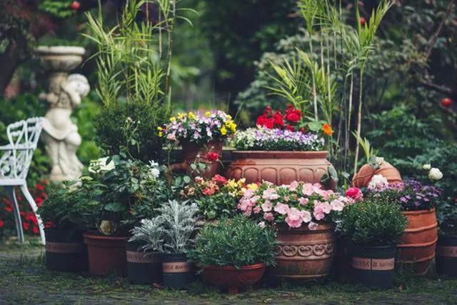 Góc vườn đẹp như tấm thảm nhiều màu sắc rực rỡ.