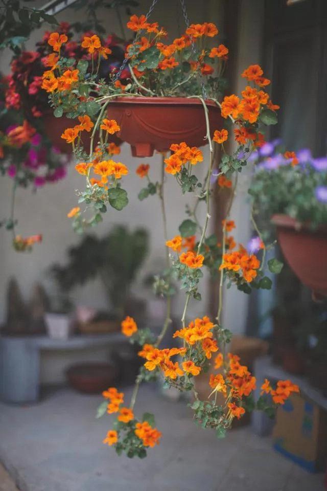 Mỗi góc nhỏ đều nổi bật với hoa.