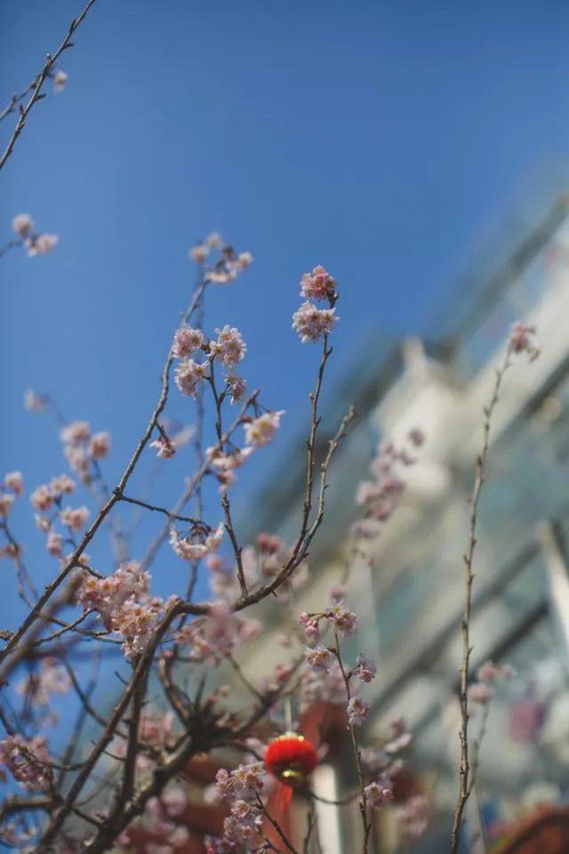 Góc hoa của mùa xuân.
