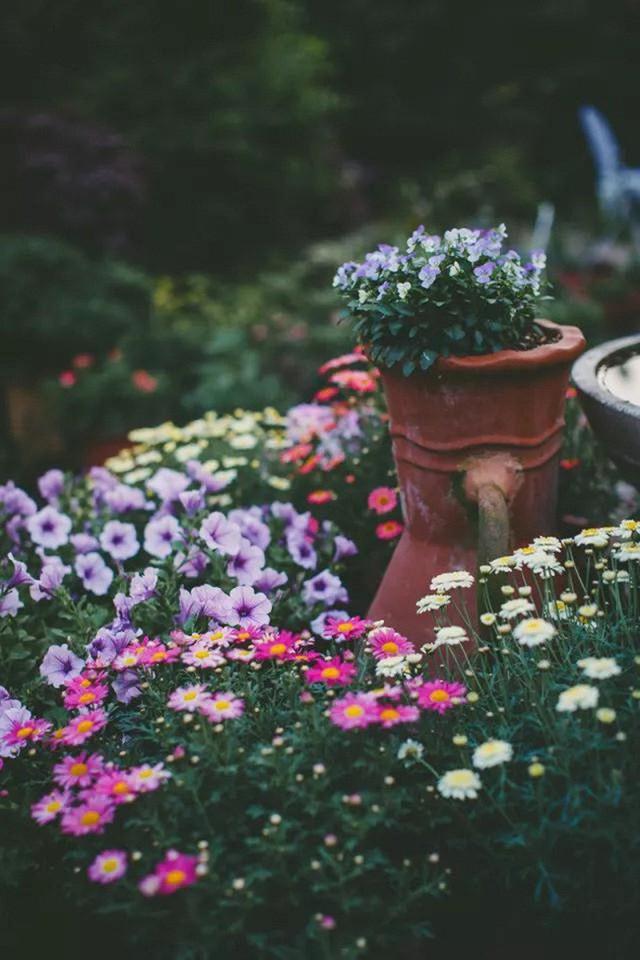 Không gian dịu dàng hoa cúc.