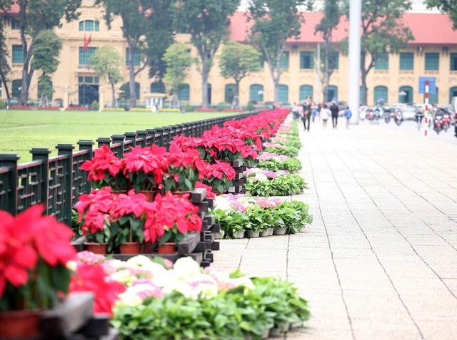 Quảng trường Lăng Chủ tịch Hồ Chí Minh cũng xuất hiện nhiều loài hoa từ Đà Lạt.