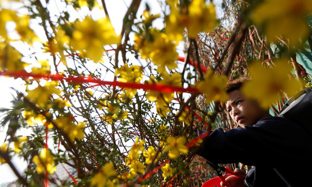 Cây tài lộc Pka Angkea Sil được người Campuchia coi là mang lại may mắn và hạnh phúc trong năm mới âm lịch.