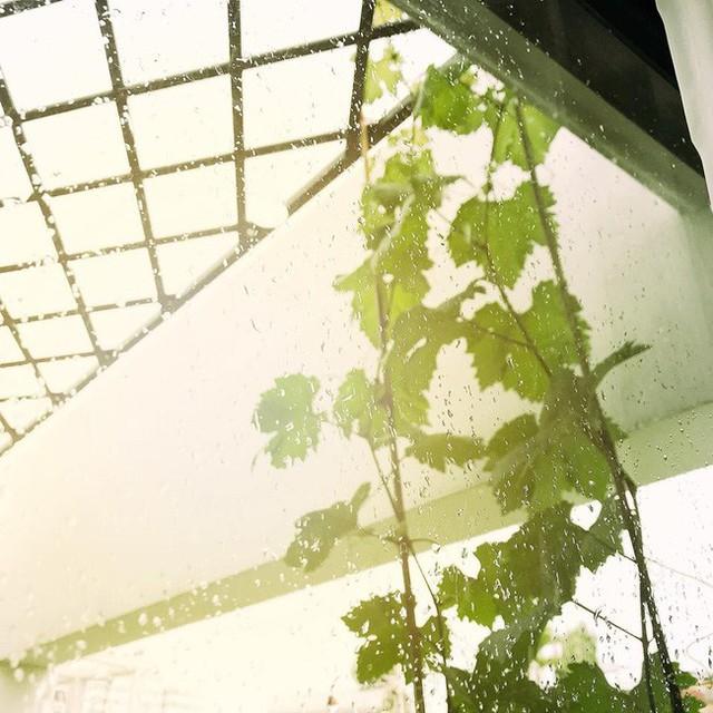 Khoảng sân thượng nhìn từ bên trong cửa kính vô cùng lãng mạn.