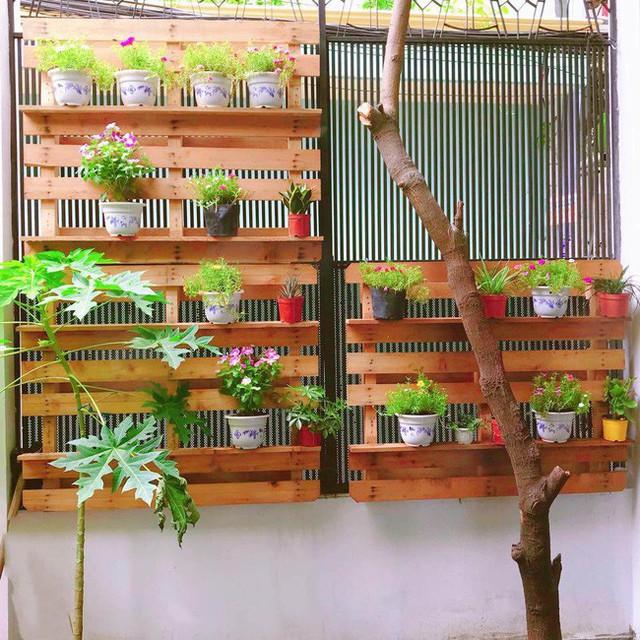 Cô còn trồng các loại cây leo giàn như dưa chuột, bầu bí, các loại hoa hồng, hoa thiên điểu cùng một vài loại cây ăn trái như lựu, ổi, chanh, chuối pháo, khế ngọt…